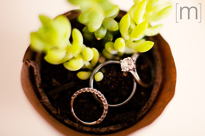 a wedding photo of the rings in a succulent at casa loma toronto