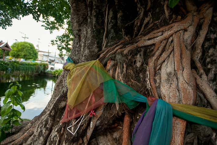 a travel photo of a rainbow covered flag tree in chaing mai thailand