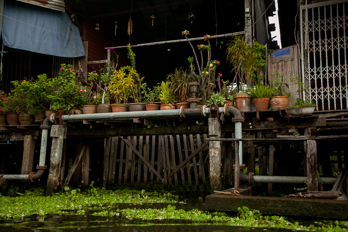 a travel photo of hanging plants in the floating market in bangkok thailand