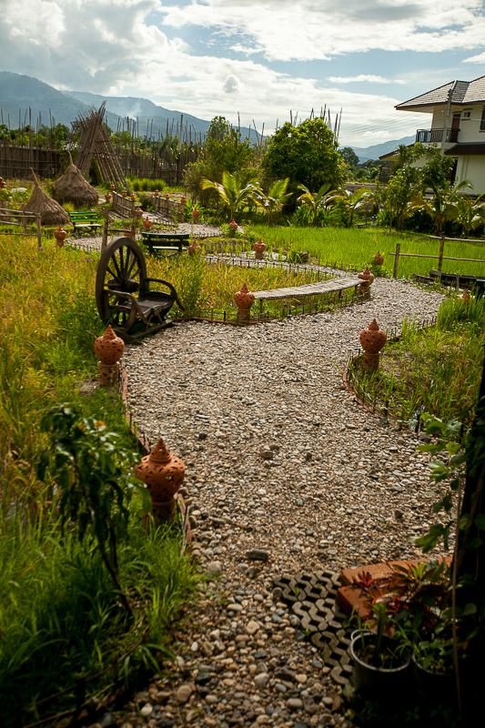 a travel photo of a rice farm in chaing mai thailand