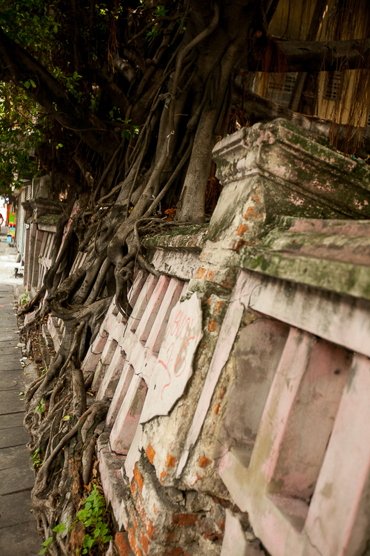 a travel photo of a tree root taking over in bangkok thailand