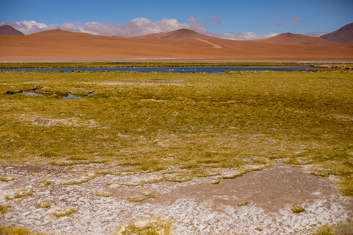 a travel photo of pink flamingos in atacama desert, chile south america