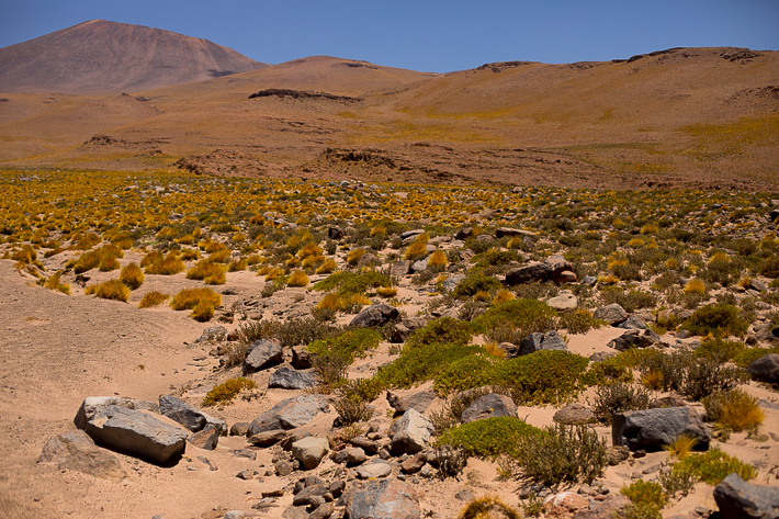 a travel photo of the mountain with green grass in atacama desert, chile south america
