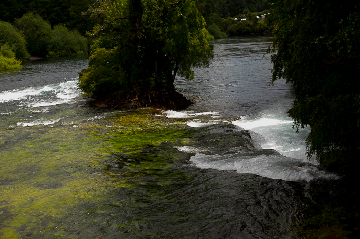 a travel photo of a river rapids with a tree on huilo huilo biological reserve chile south america