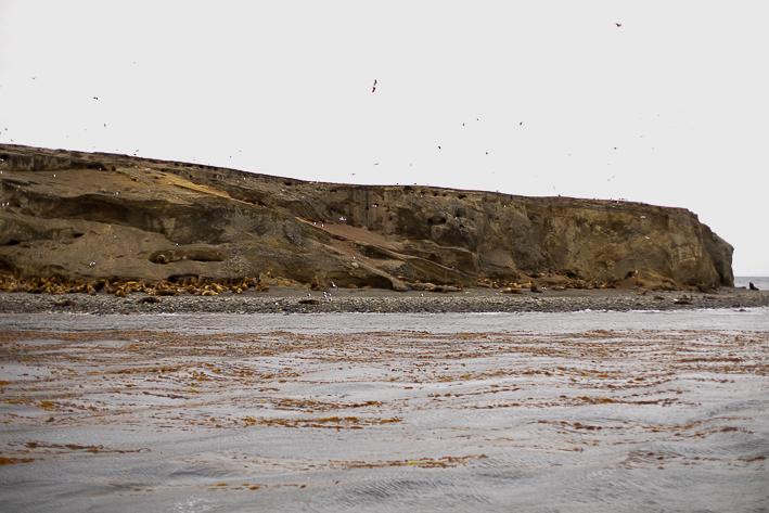 a travel photo of a seals at magdalena island near punta arenas chile south america