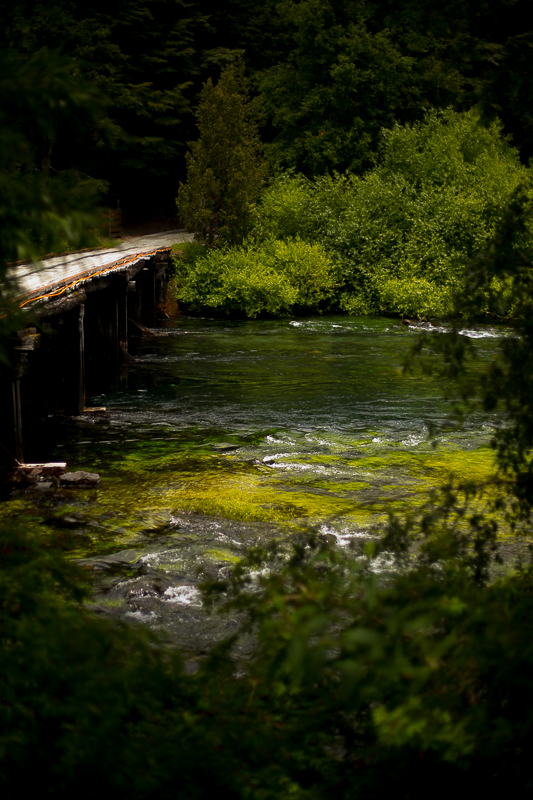 a travel photo of a bridge in river rapids with a tree on huilo huilo biological reserve chile south america